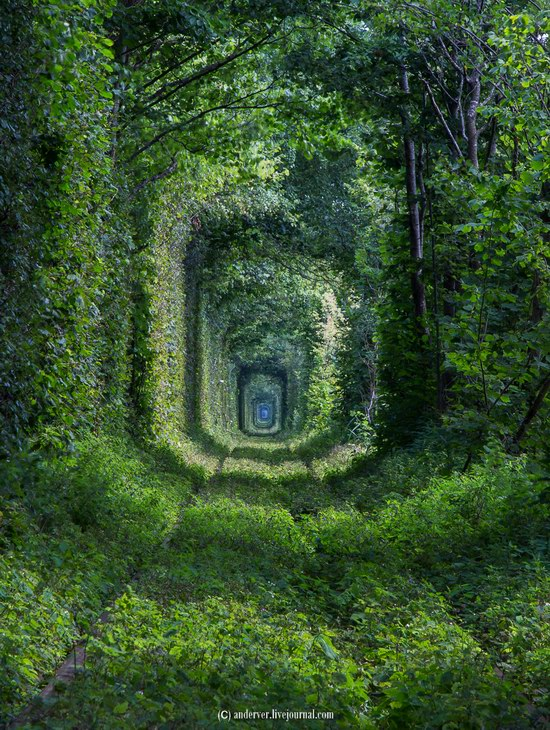 The Tunnel of Love, Rivne region, Ukraine, photo 12