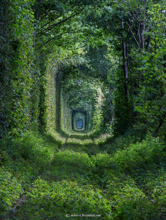 The Tunnel of Love, Rivne region, Ukraine, photo 12
