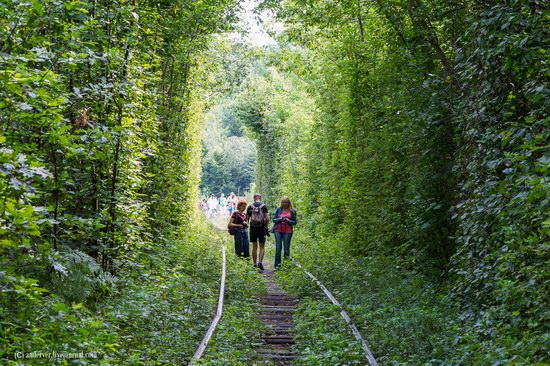 The Tunnel of Love, Rivne region, Ukraine, photo 5