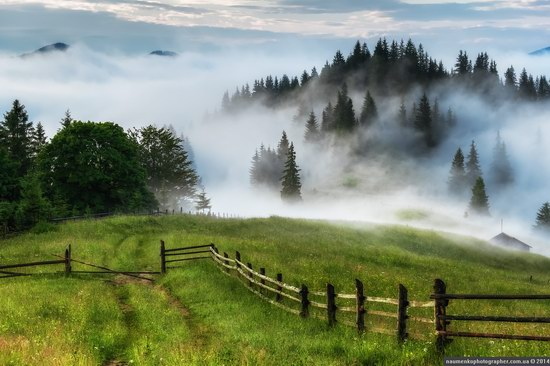 Dzembronya mystical fog, the Ukrainian Carpathians, photo 1