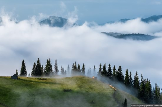 Dzembronya mystical fog, the Ukrainian Carpathians, photo 2
