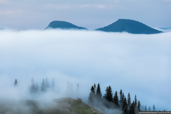 Dzembronya mystical fog, the Ukrainian Carpathians, photo 3