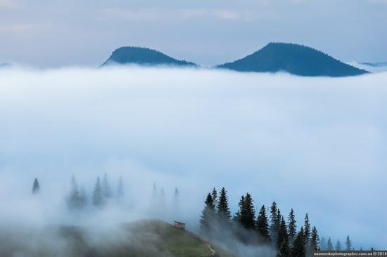 Dzembronya mystical fog, the Ukrainian Carpathians, photo 3