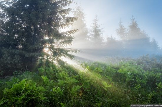 Dzembronya mystical fog, the Ukrainian Carpathians, photo 5