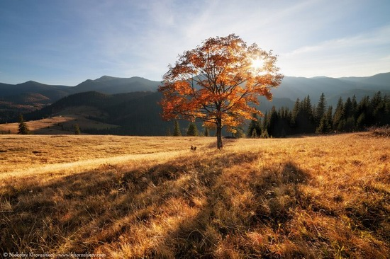 Golden autumn in the Ukrainian Carpathians, photo 4