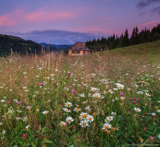 Summer evenings in the Ukrainian Carpathians, photo 7
