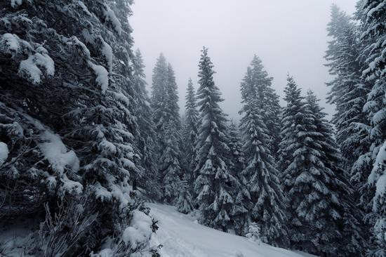 Winter in the Ukrainian Carpathians, photo 2