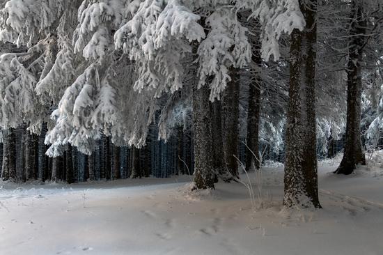 Winter in the Ukrainian Carpathians, photo 3