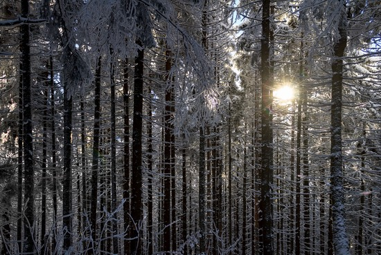 Winter in the Ukrainian Carpathians, photo 5