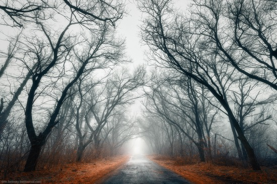 Mysterious foggy forest on the island of Khortytsia, Ukraine, photo 1