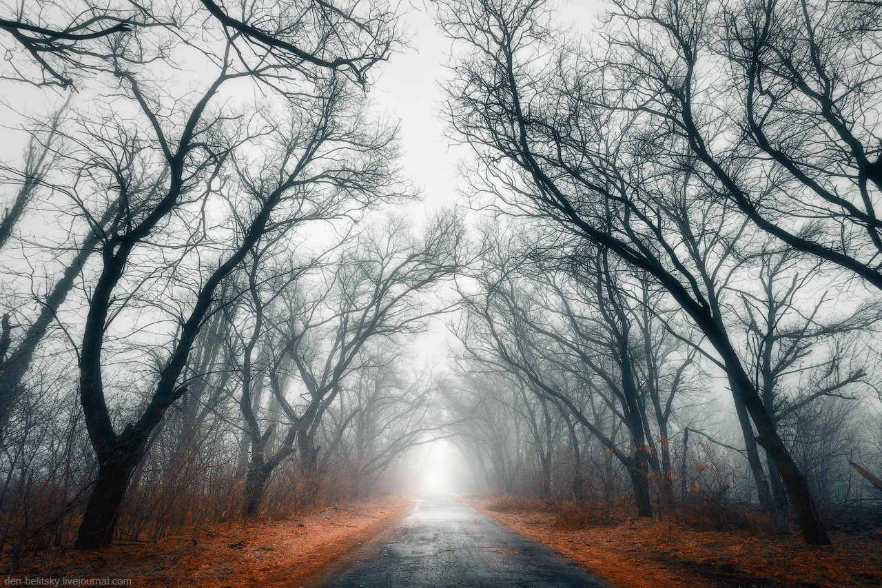 foggy forest by a - photo #22