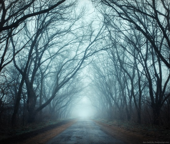 Mysterious foggy forest on the island of Khortytsia, Ukraine, photo 2