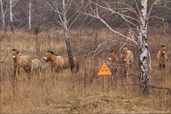 Chernobyl zone 29 years later, Ukraine, photo 11