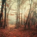 Fairy-tale forest in Baydar Valley in Crimea