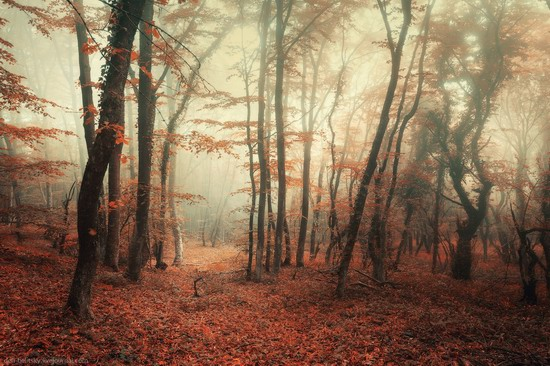 Fairy-tale forest, Baydar Valley, Crimea, photo 1