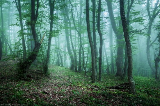 Fairy-tale forest, Baydar Valley, Crimea, photo 10