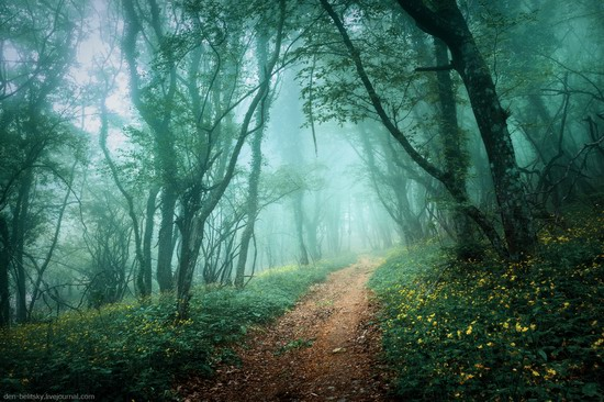Fairy-tale forest, Baydar Valley, Crimea, photo 11