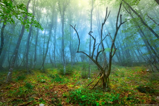 Fairy-tale forest, Baydar Valley, Crimea, photo 12
