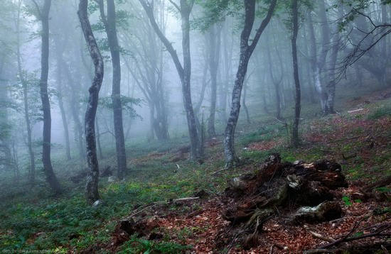 Fairy-tale forest, Baydar Valley, Crimea, photo 13
