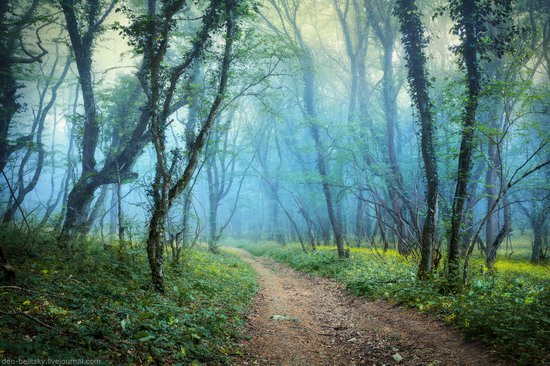 Fairy-tale forest, Baydar Valley, Crimea, photo 14