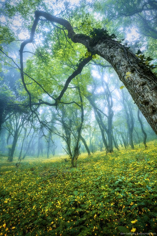 Fairy-tale forest, Baydar Valley, Crimea, photo 15