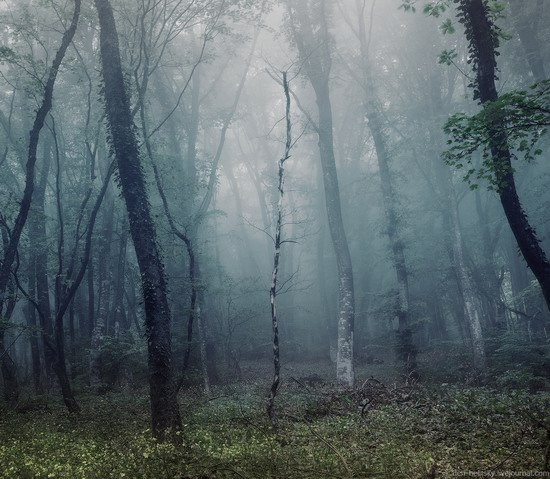 Fairy-tale forest, Baydar Valley, Crimea, photo 16