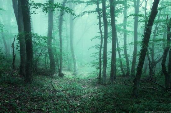 Fairy-tale forest, Baydar Valley, Crimea, photo 2