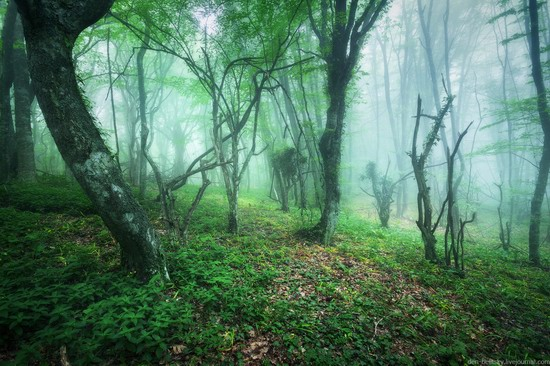 Fairy-tale forest, Baydar Valley, Crimea, photo 3