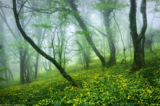 Fairy-tale forest, Baydar Valley, Crimea, photo 4