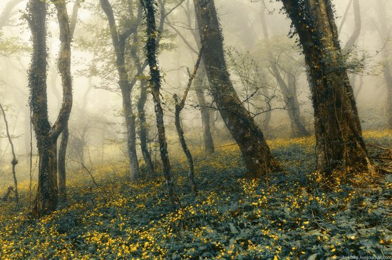 Fairy-tale forest, Baydar Valley, Crimea, photo 5