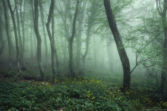 Fairy-tale forest, Baydar Valley, Crimea, photo 6