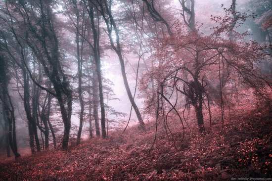 Fairy-tale forest, Baydar Valley, Crimea, photo 7