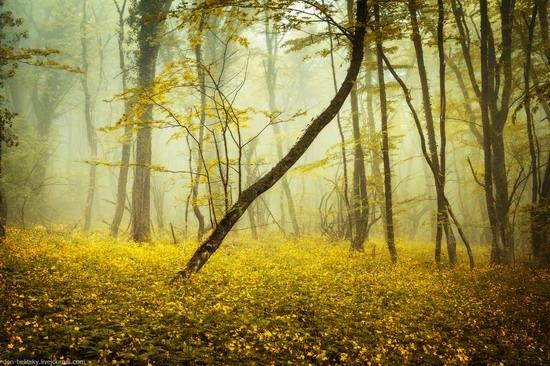 Fairy-tale forest, Baydar Valley, Crimea, photo 8