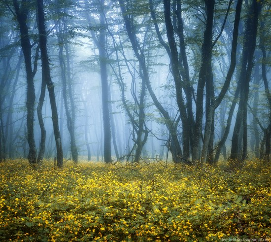 Fairy-tale forest, Baydar Valley, Crimea, photo 9