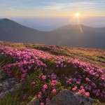 Flowering Carpathians – Chornohora Mountain Range