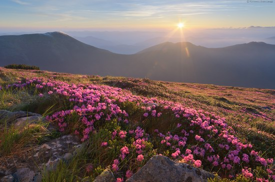 Flowering Carpathians, Chornohora, Ukraine, photo 1