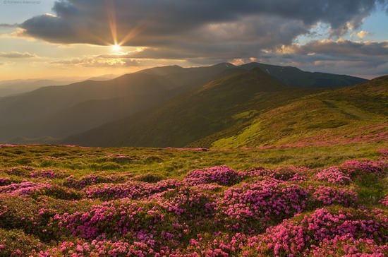 Flowering Carpathians, Chornohora, Ukraine, photo 15