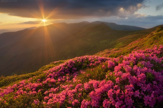 Flowering Carpathians, Chornohora, Ukraine, photo 17