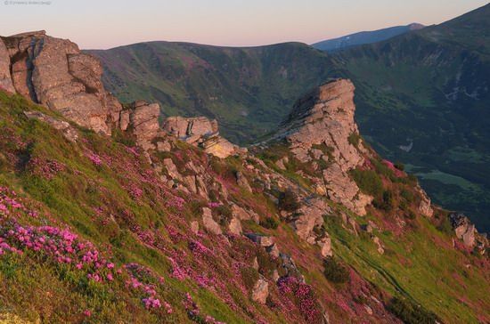 Flowering Carpathians, Chornohora, Ukraine, photo 2