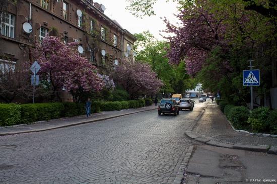 Sakura blossom in Uzhgorod, Ukraine, photo 11