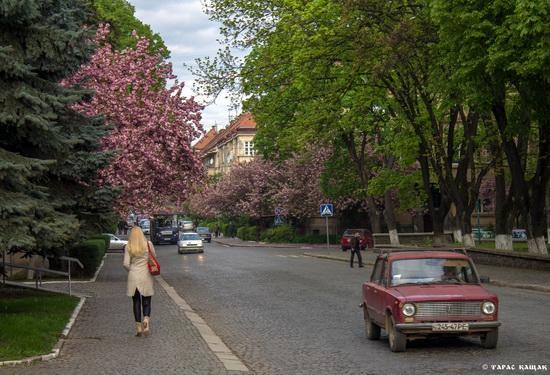 Sakura blossom in Uzhgorod, Ukraine, photo 18