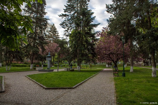 Sakura blossom in Uzhgorod, Ukraine, photo 2