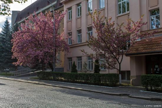 Sakura blossom in Uzhgorod, Ukraine, photo 20
