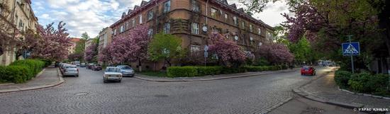 Sakura blossom in Uzhgorod, Ukraine, photo 22