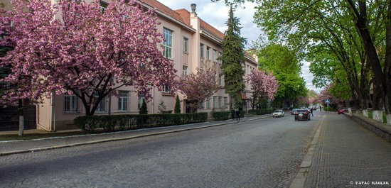 Sakura blossom in Uzhgorod, Ukraine, photo 24