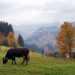 All colors of autumn in the Ukrainian Carpathians