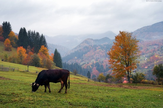 All colors of autumn in the Ukrainian Carpathians, photo 1