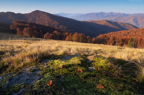 All colors of autumn in the Ukrainian Carpathians, photo 10