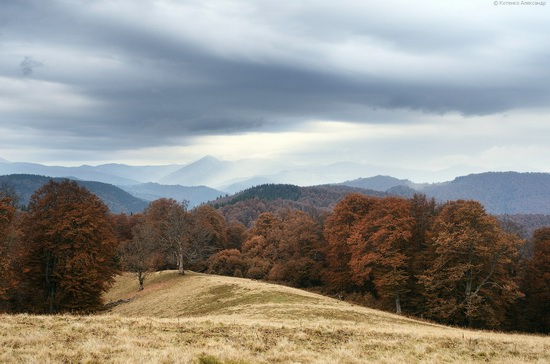 All colors of autumn in the Ukrainian Carpathians, photo 12