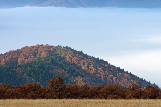 All colors of autumn in the Ukrainian Carpathians, photo 16